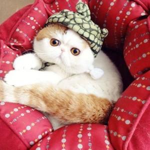 可愛い猫42